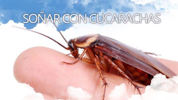 Significado de soñar con cucarachas